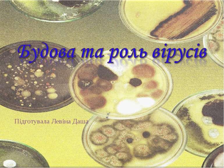 Підготувала Левіна Даша