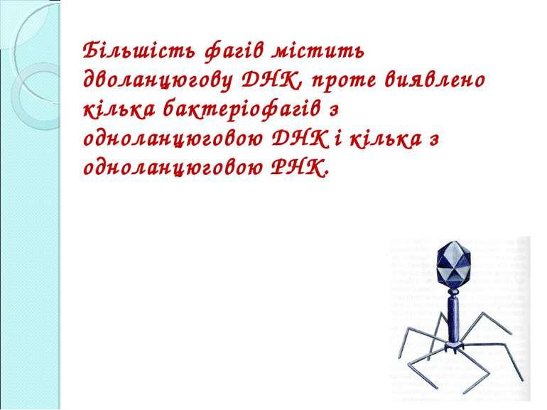 Більшість фагів містить дволанцюгову ДНК, проте виявлено кілька бактеріофагів...