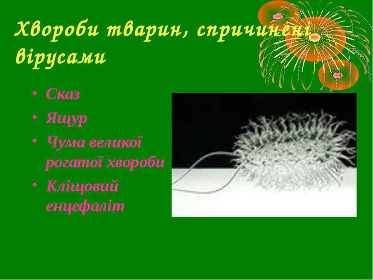 Хвороби тварин, спричинені вірусами Сказ Ящур Чума великої рогатої хвороби Кл...