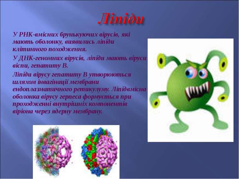 У РНК-вмісних брунькуючих вірусів, які мають оболонку, виявились ліпіди кліти...