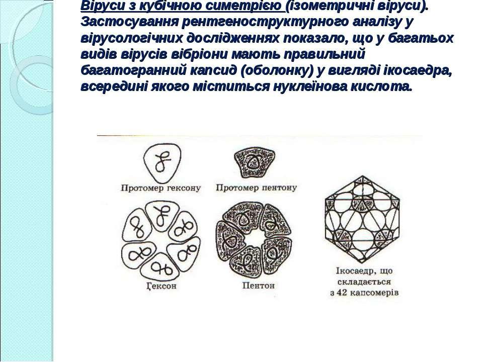 Віруси з кубічною симетрією (ізометричні віруси). Застосування рентгенострукт...