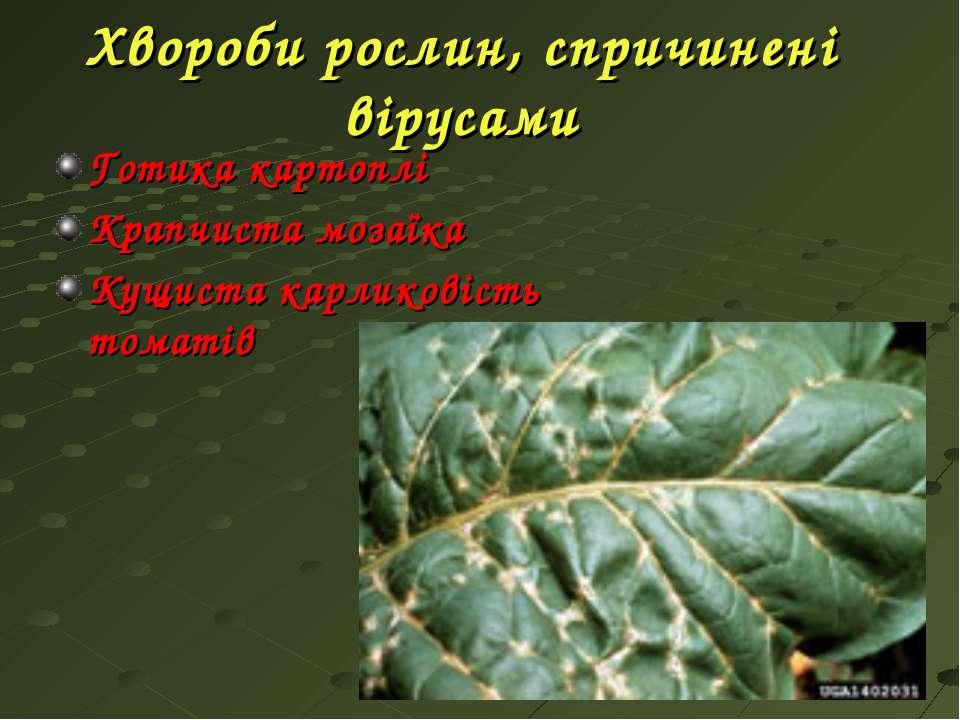 Хвороби рослин, спричинені вірусами Готика картоплі Крапчиста мозаїка Кущиста...