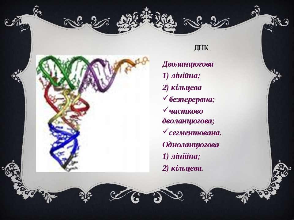 ДНК Дволанцюгова 1) лінійна; 2) кільцева безперервна; частково дволанцюгова; ...