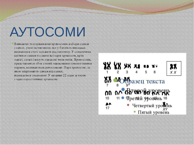 АУТОСОМИ Вивчаючи та порівнюючи хромосомні набори самців ісамок, учені встан...
