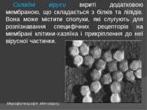 Складні віруси вкриті додатковою мембраною, що складається з білків та ліпіді...