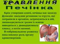 Крім утворення жовчі, печінка має захисну функцію: шкідливі речовини та отрут...