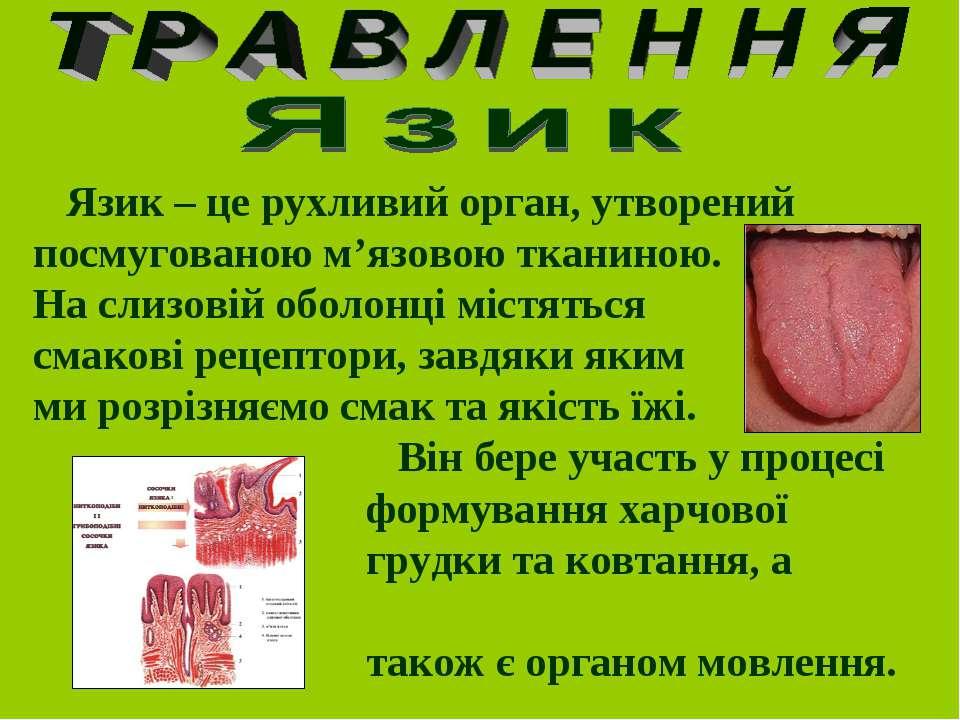 Язик – це рухливий орган, утворений посмугованою м'язовою тканиною. На слизов...