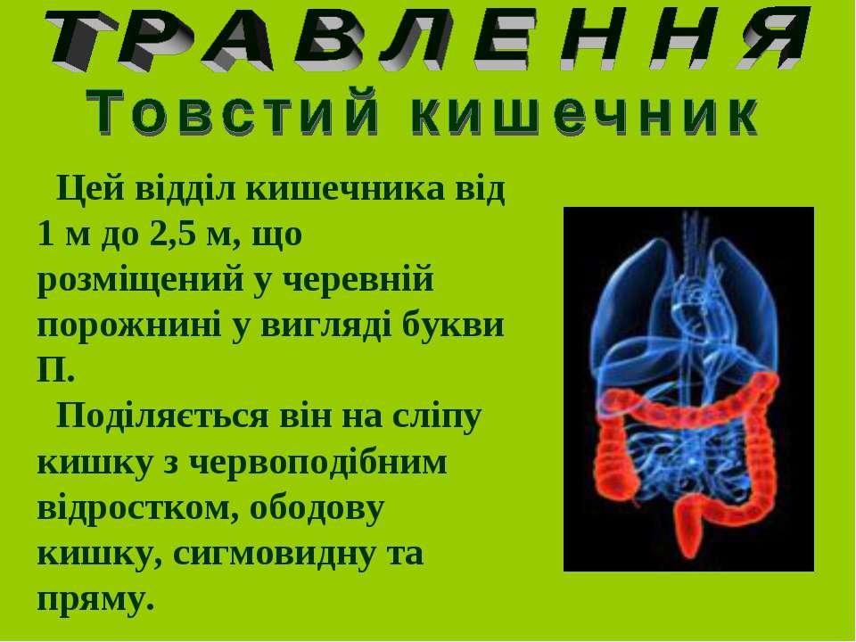 Цей відділ кишечника від 1 м до 2,5 м, що розміщений у черевній порожнині у в...