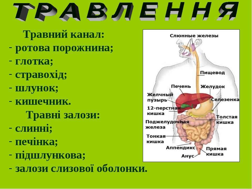 Травний канал: ротова порожнина; глотка; стравохід; шлунок; кишечник. Травні ...
