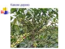 Кавове дерево