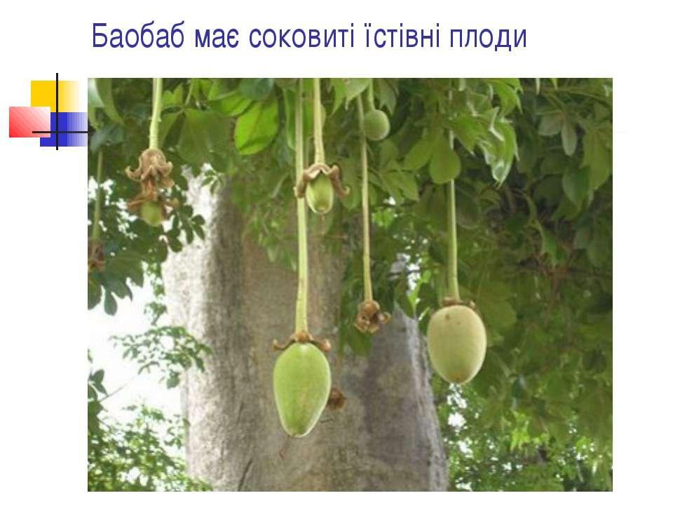 Баобаб має соковиті їстівні плоди
