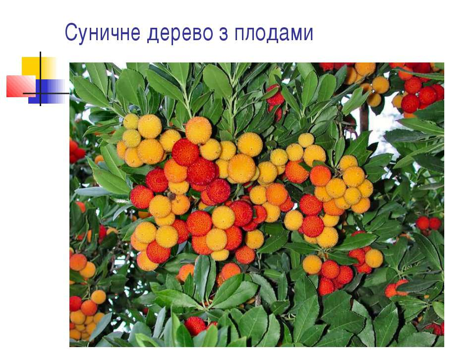 Суничне дерево з плодами