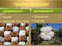 Буряк Цукрова тростина Бавовник Каучук