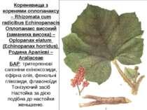 Кореневища з коренями оплопанаксу – Rhizomata cum radicibus Echinopanacis Опл...