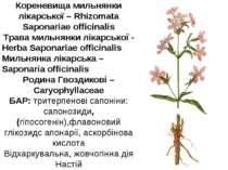 Кореневища мильнянки лікарської – Rhizomata Saponariae officinalis Трава миль...