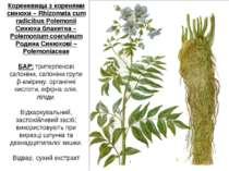 Кореневища з коренями синюхи – Rhizomata cum radicibus Polemonii Синюха блаки...