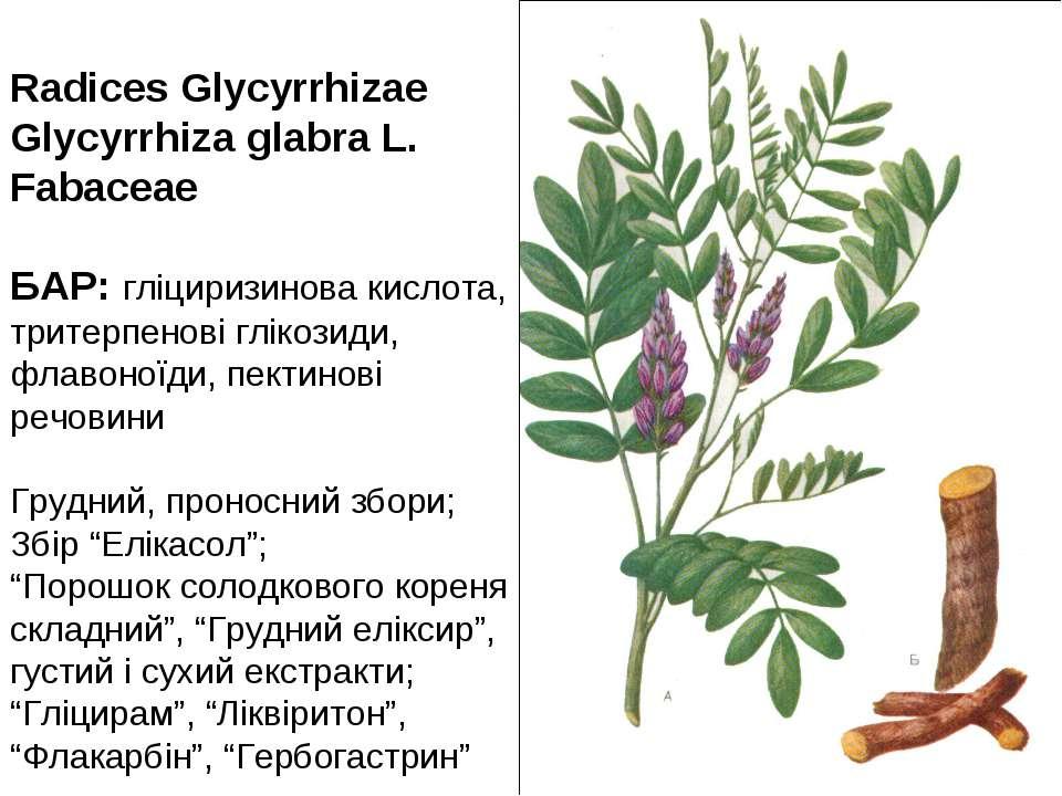 Radices Glycyrrhizae Glycyrrhiza glabra L. Fabaceae БАР: гліциризинова кислот...