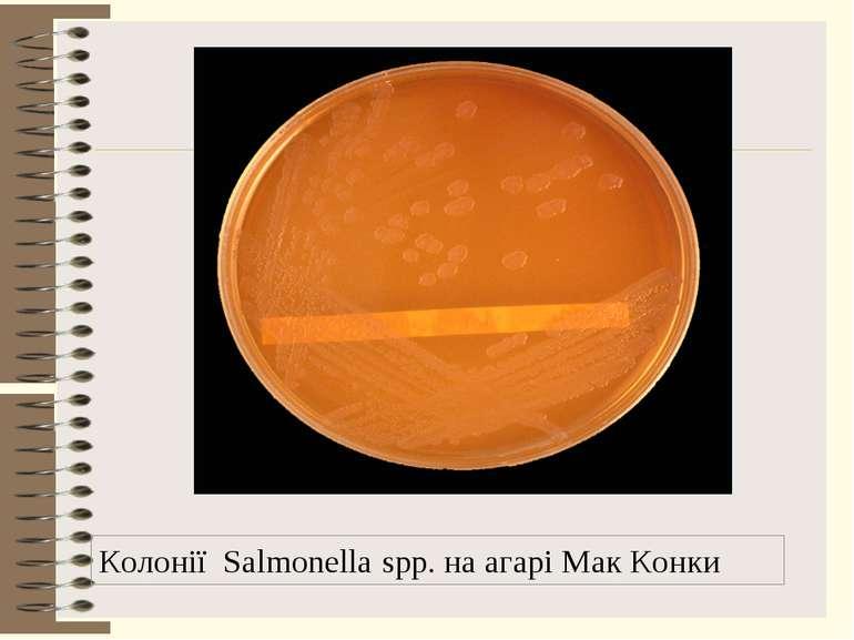 Колонії Salmonella spp. на агарі Мак Конки