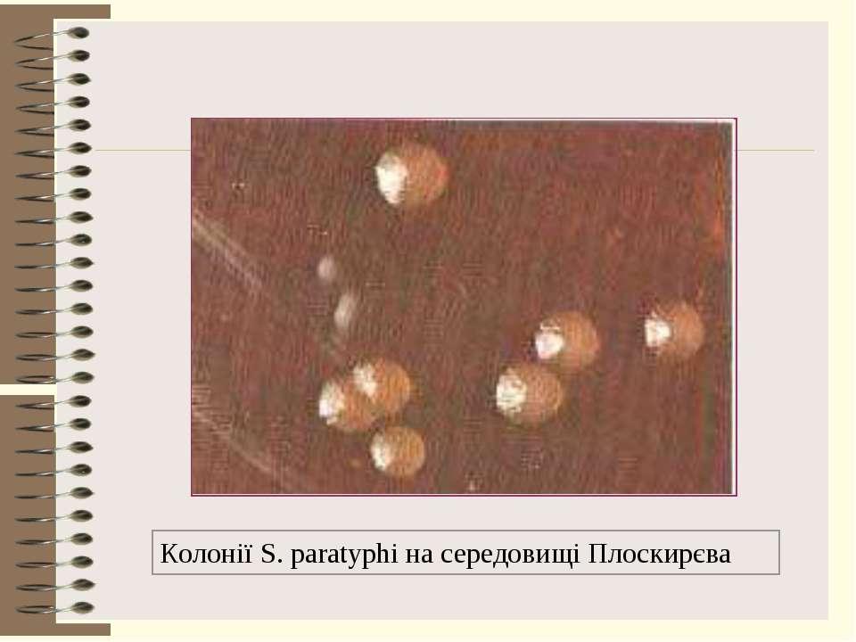 Колонії S. paratyphi на середовищі Плоскирєва