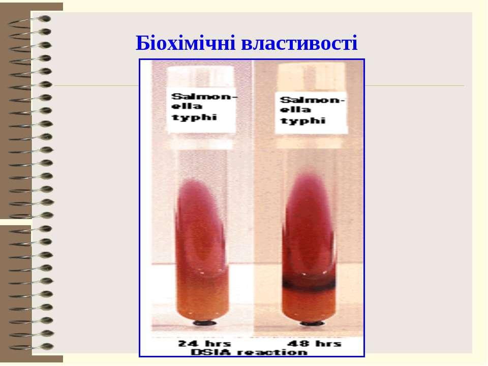 Біохімічні властивості