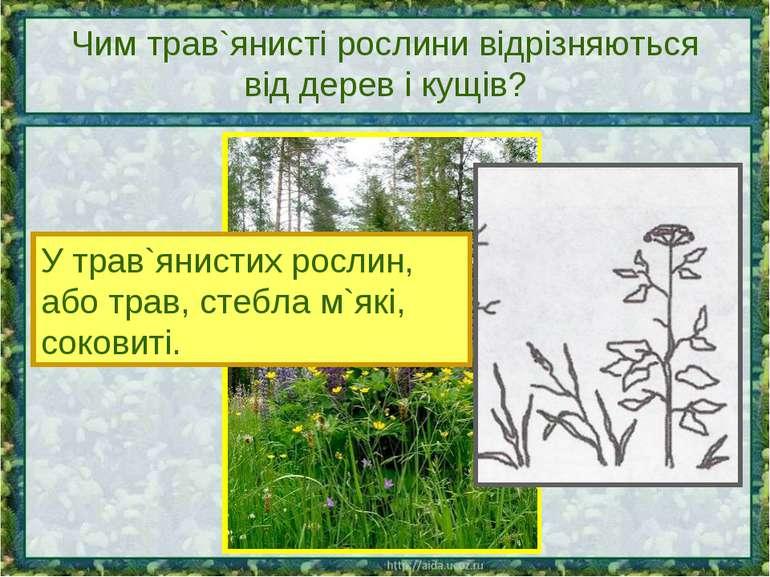 Чим трав`янисті рослини відрізняються від дерев і кущів? У трав`янистих росли...
