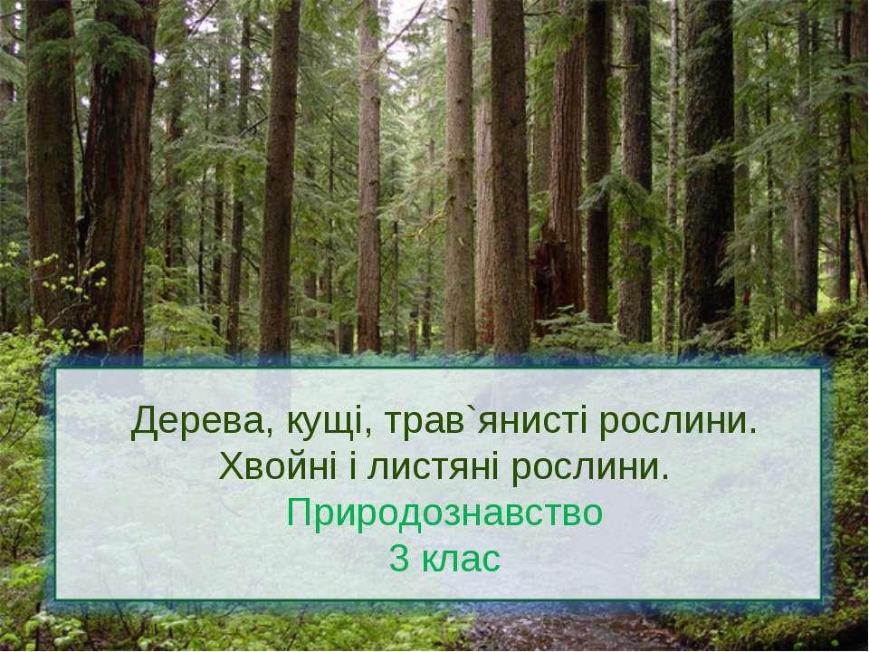Дерева, кущі, трав`янисті рослини. Хвойні і листяні рослини. Природознавство ...