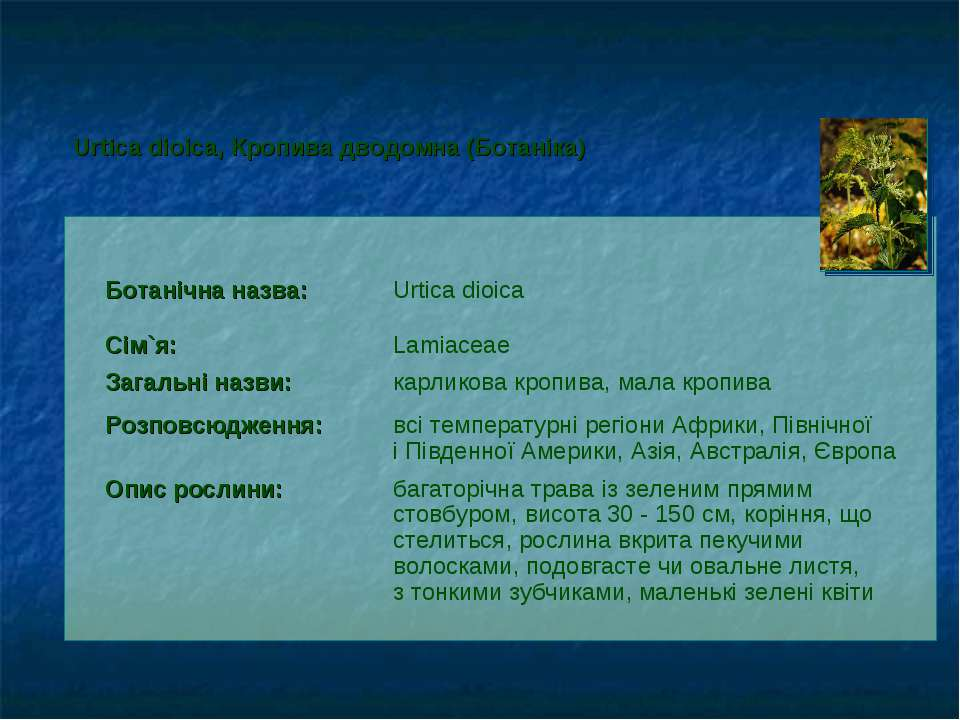 Ботанічна назва: Urtica dioica Сім`я: Lamiaceae Загальні назви: карликова кро...