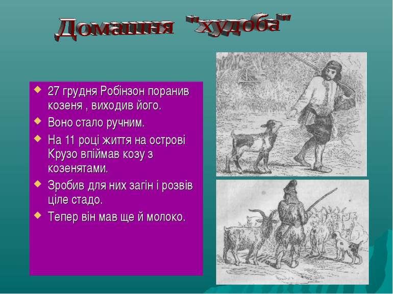 27 грудня Робінзон поранив козеня , виходив його. Воно стало ручним. На 11 ро...