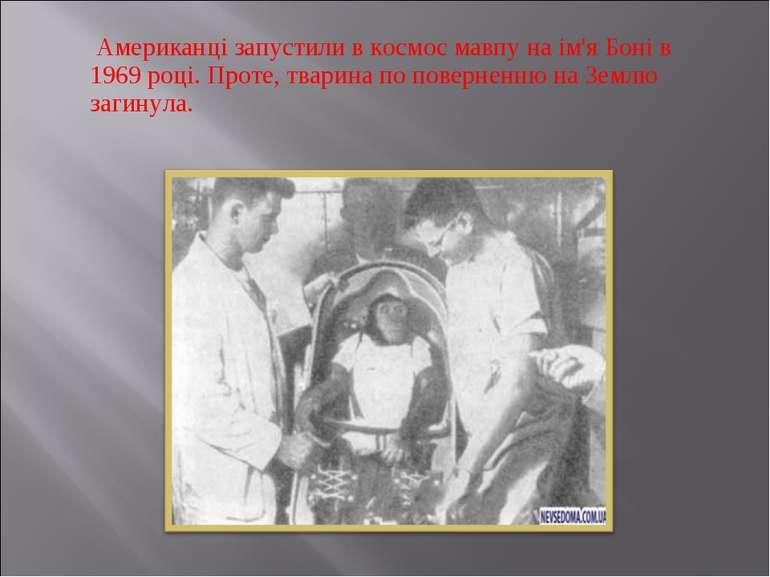 Американці запустили в космос мавпу на ім'я Боні в 1969 році. Проте, тварина ...
