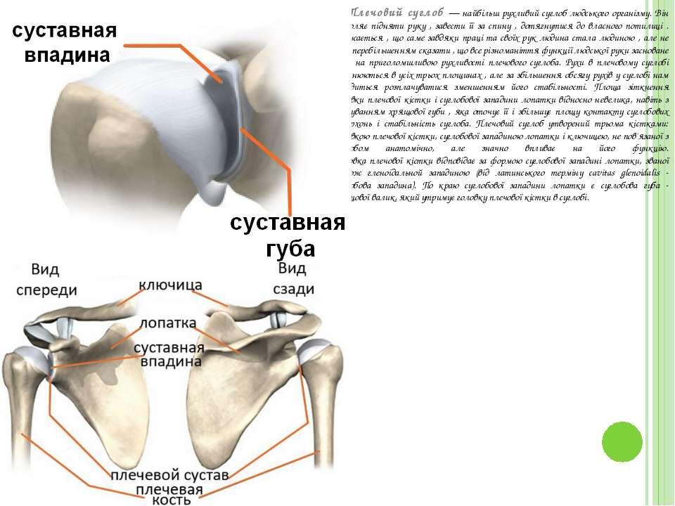 Плечовий суглоб — найбільш рухливий суглоб людського організму. Він дозволяє ...