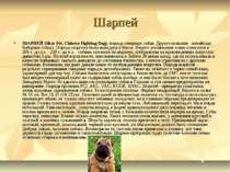Шарпей ШАРПЕЙ (Shar Pei, Chinese Fighting Dog), порода северных собак. Другое...