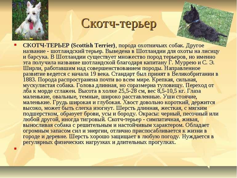 Скотч-терьер СКОТЧ-ТЕРЬЕР (Scottish Terrier), порода охотничьих собак. Другое...