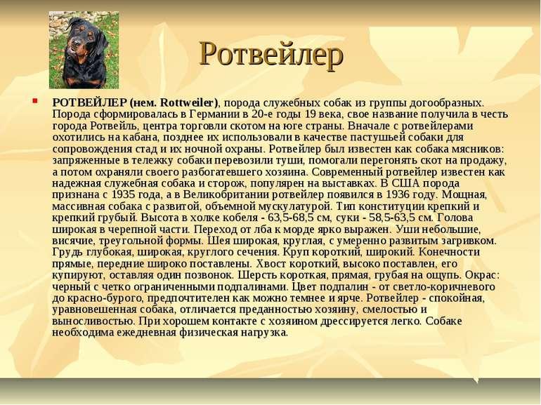 Ротвейлер РОТВЕЙЛЕР (нем. Rottweiler), порода служебных собак из группы догоо...