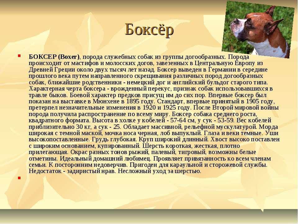 Боксёр БОКСЕР (Boxer), порода служебных собак из группы догообразных. Порода ...