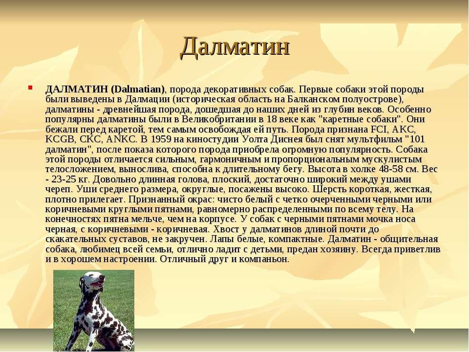 Далматин ДАЛМАТИН (Dalmatian), порода декоративных собак. Первые собаки этой ...