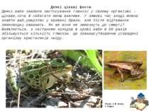 Деякі цікаві факти. Деякі жаби знайшли застосування глюкозі у своєму організм...