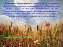 Узагальнено-особові речення, в яких присудок виражається формою 2-ої особи од...
