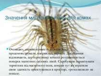 Значення магнітного поля для комах Очевидно, сприйнятливість до поля Землі пр...