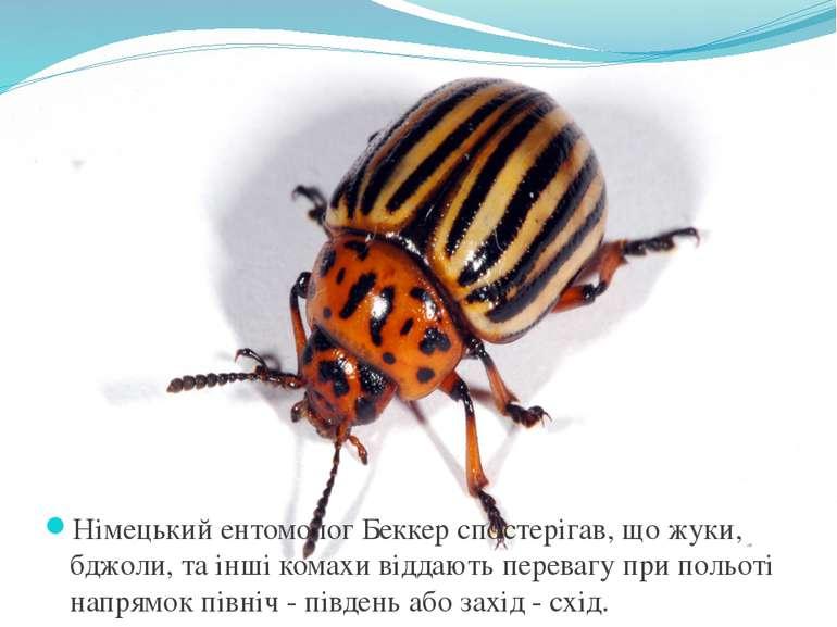 Німецький ентомолог Беккер спостерігав, що жуки, бджоли, та інші комахи відда...