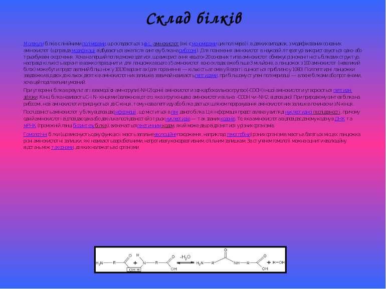 Склад білків Молекулибілків є лінійнимиполімерами, що складаються зα-L-амі...