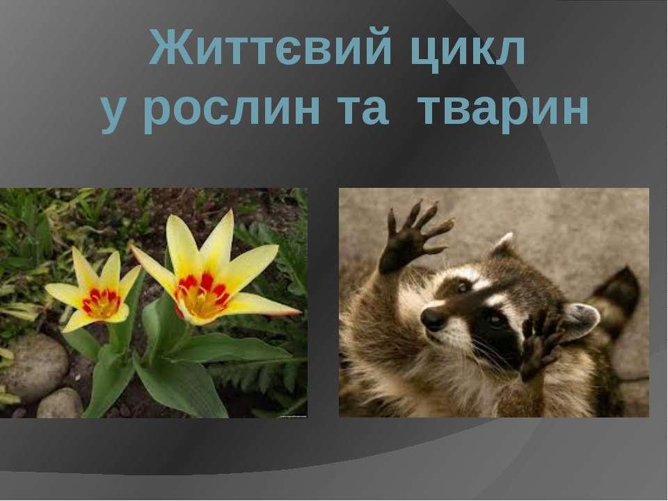 Життєвий цикл у рослин та тварин
