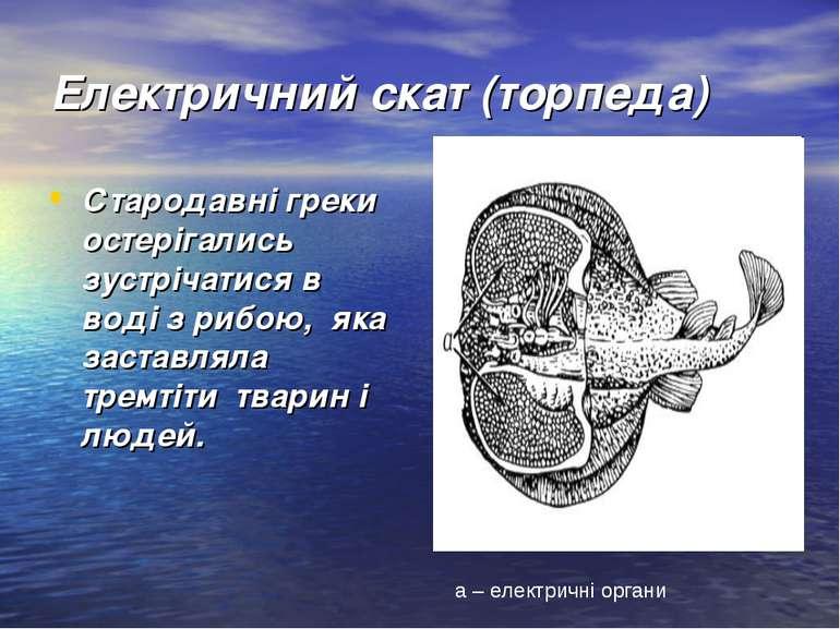 Електричний скат (торпеда) Стародавні греки остерігались зустрічатися в воді ...