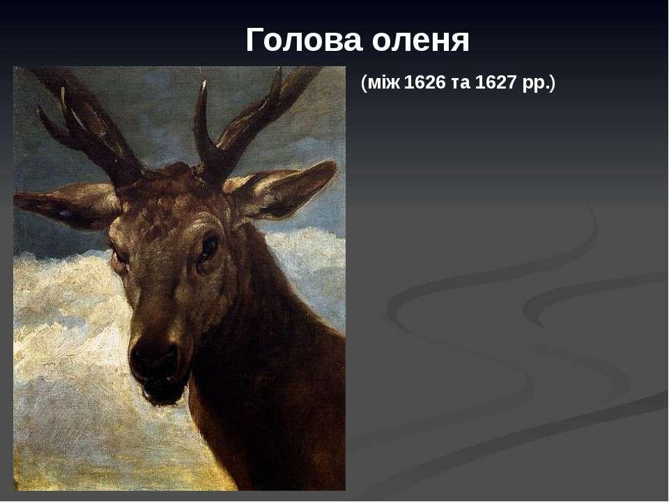 Голова оленя (між 1626 та 1627 рр.)