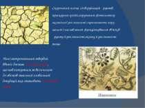 Скорочення площі лісів,руйнація ґрунтів, прискорена ерозія,порушення фотосинт...