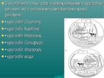 З екологічної точки зору, найважливішими є кругообіги речовин, які є основним...