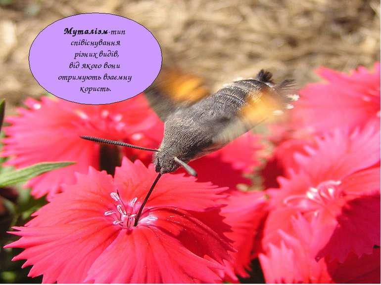 Муталізм-тип співіснування різних видів, від якого вони отримують взаємну кор...