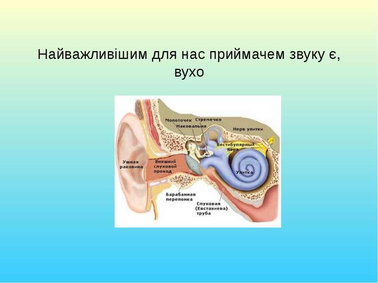 Найважливішим для нас приймачем звуку є, вухо