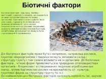 Біотичні фактори Біотичні фактори - (від грец. Biotikos - життєвий), сукупніс...