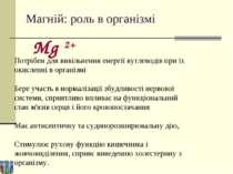 Магній: роль в організмі Потрібен для вивільнення енергії вуглеводів при їх о...