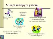 Мінерали беруть участь: Активують ферментні системи Контролюють водні баланс ...